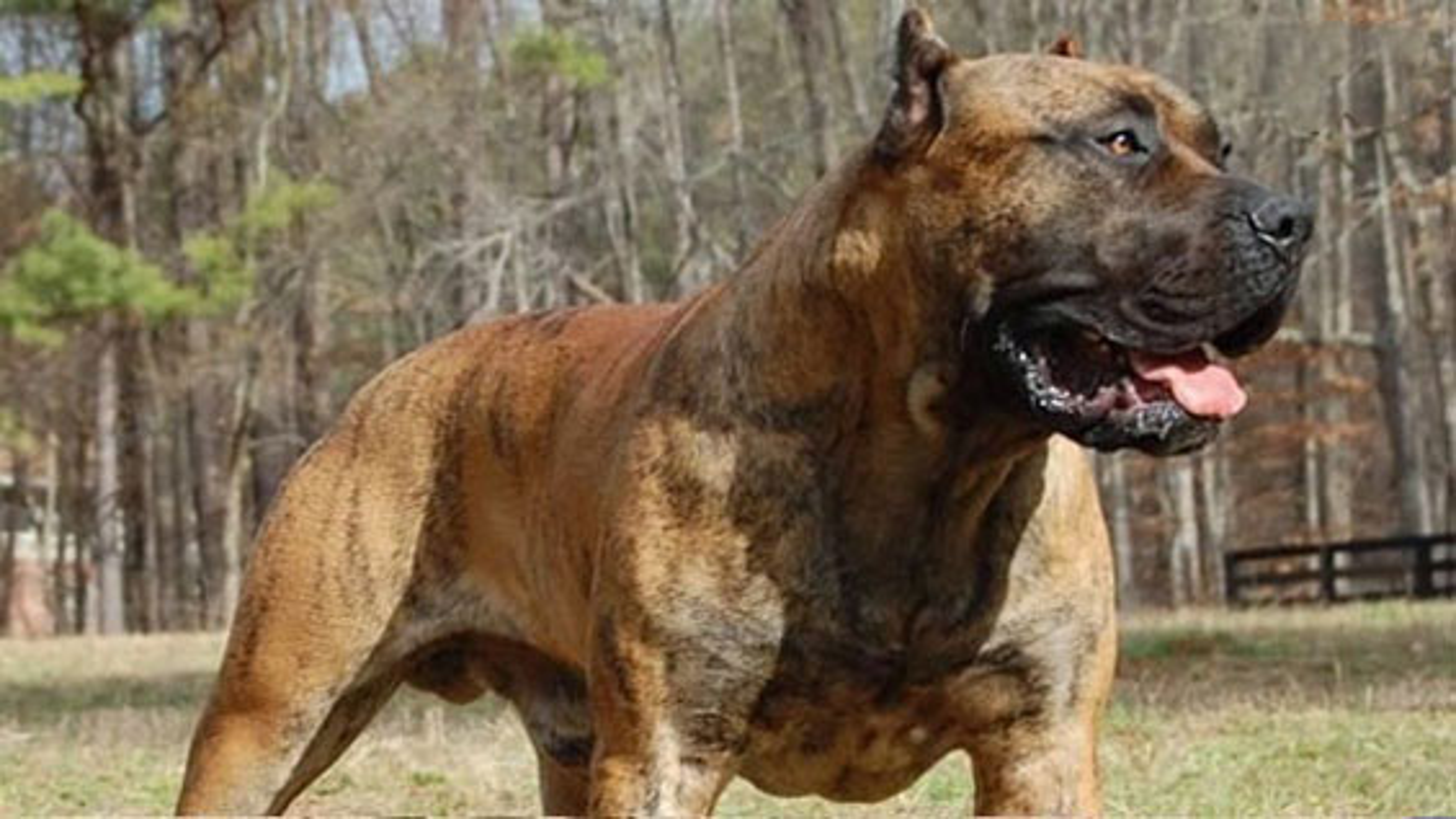خطرناک ترین سگ های جهان | فیلم