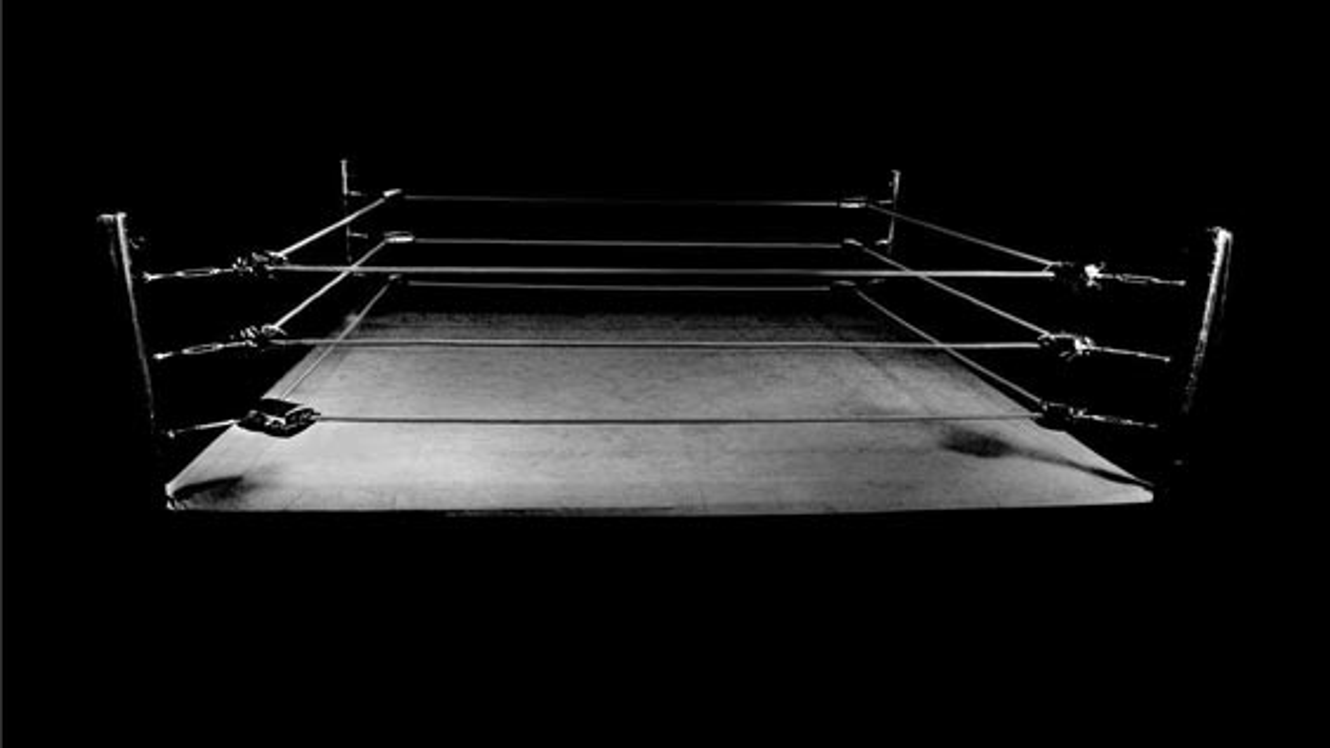 جالب ترین مسابقه بوکس بین یک مگس وزن و کرگدن وزن | فیلم
