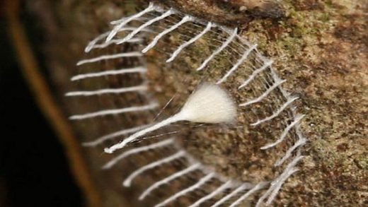 the-most-bizarre-of-an-insect-nest-photos-3