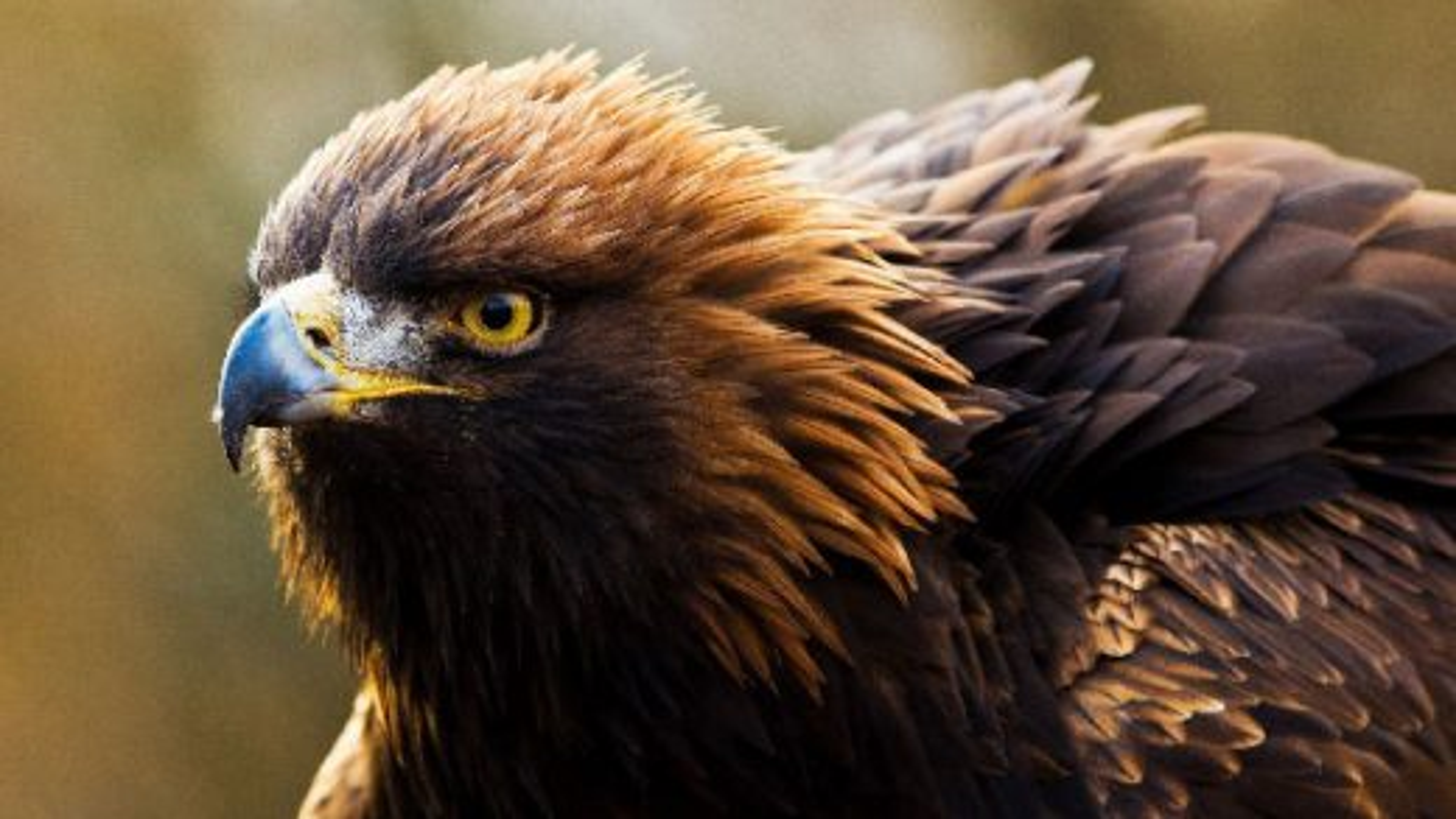 کلیپ دیدنی از لحظات شکار حیوانات مختلف|تگ