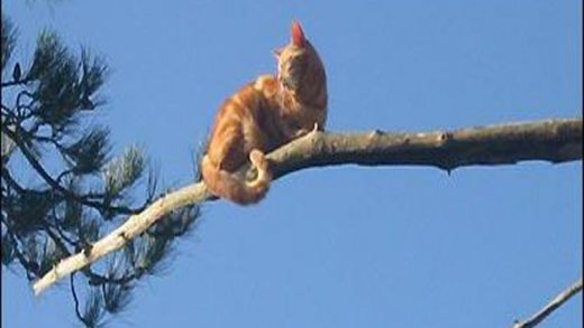 گربه روی درخت | تگ