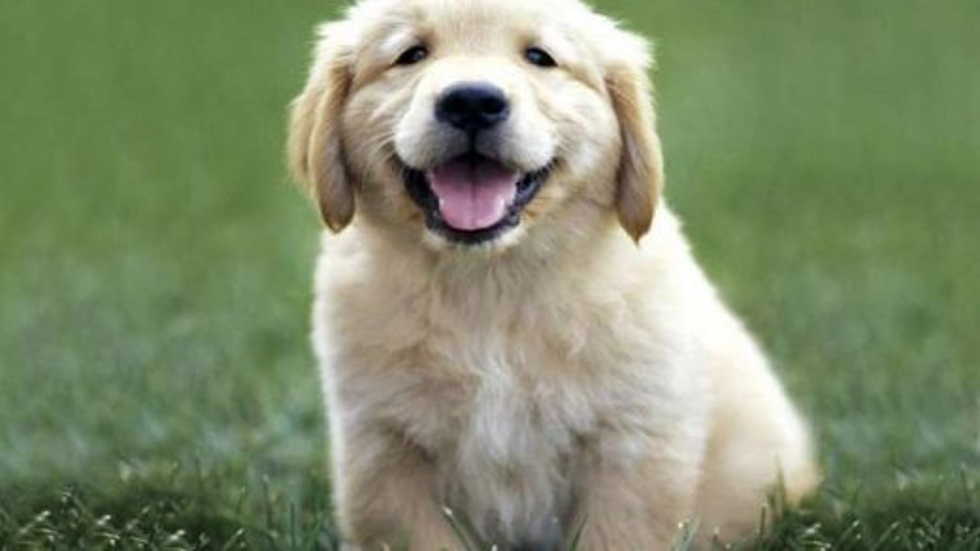 سگ | تگ