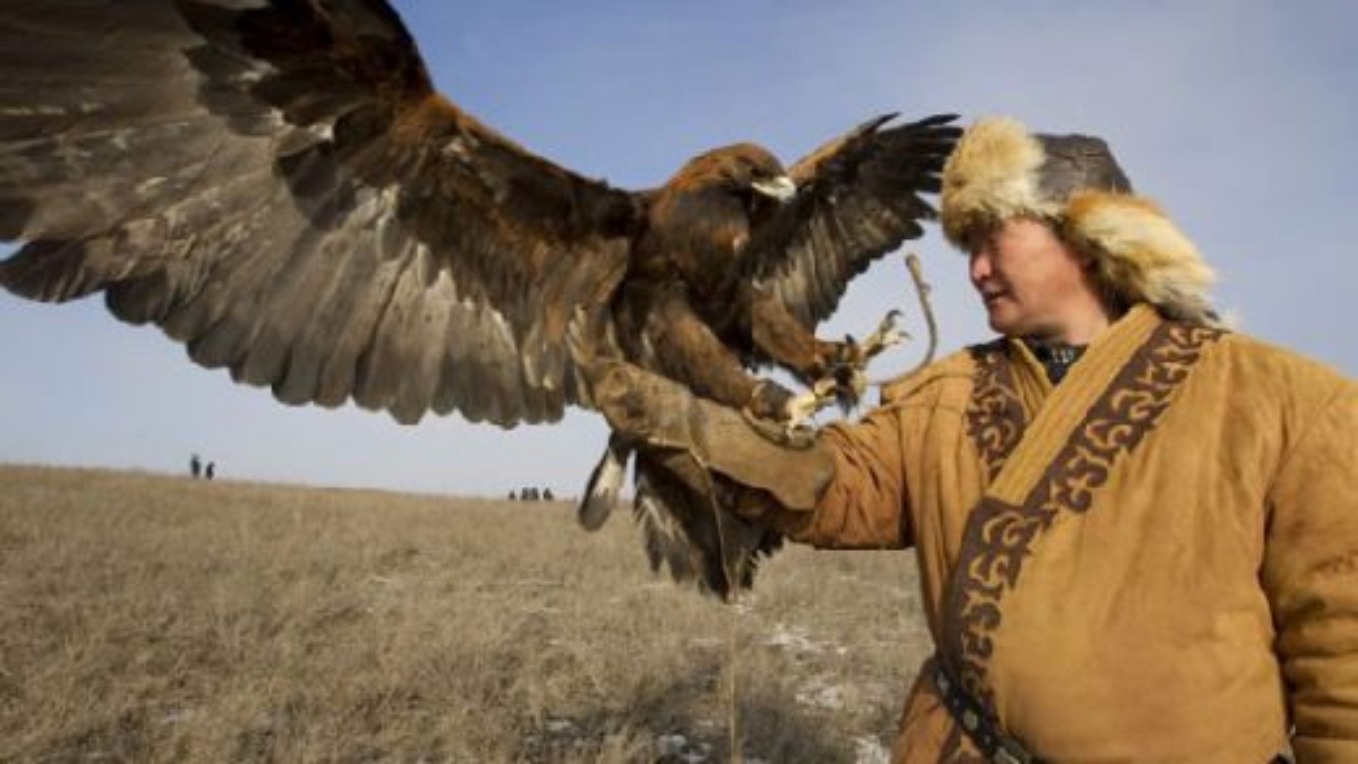 شکار روباه توسط عقاب شکاری تعلیم دیده|تگ