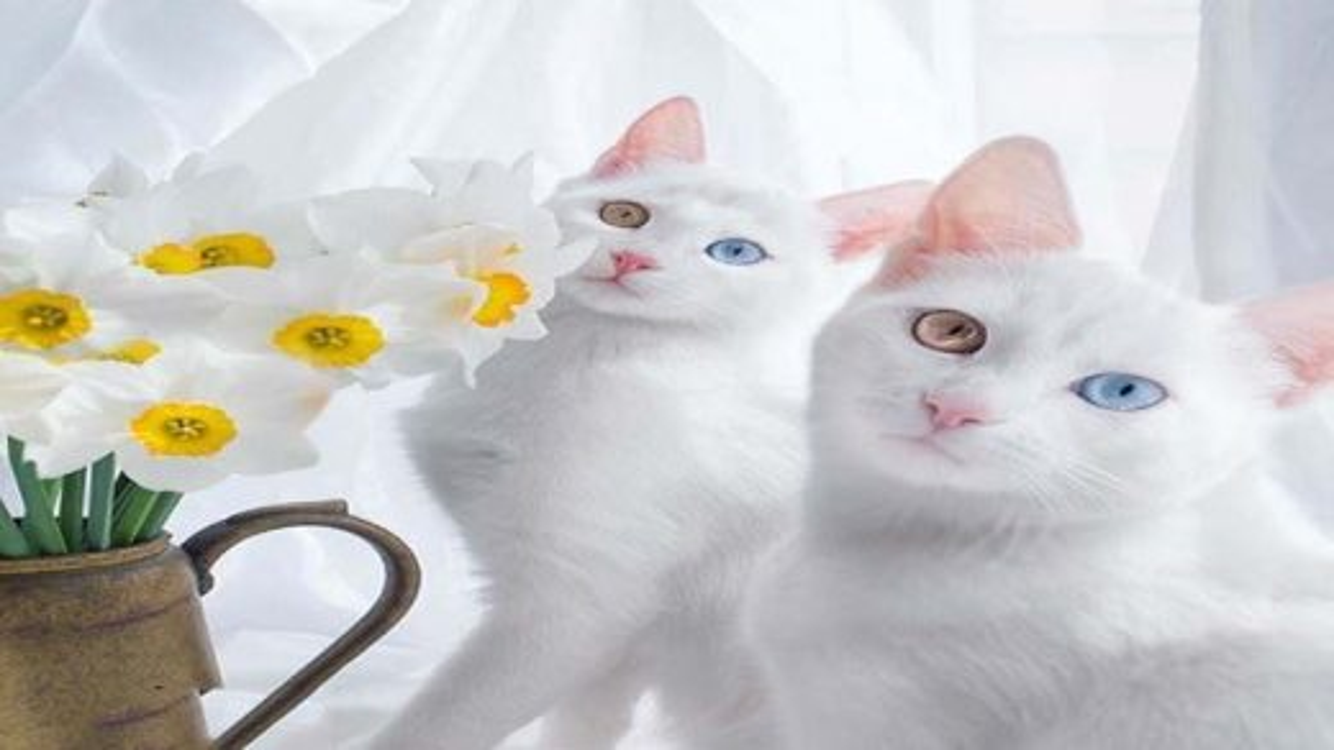 زیباترین گربه ها | تگ