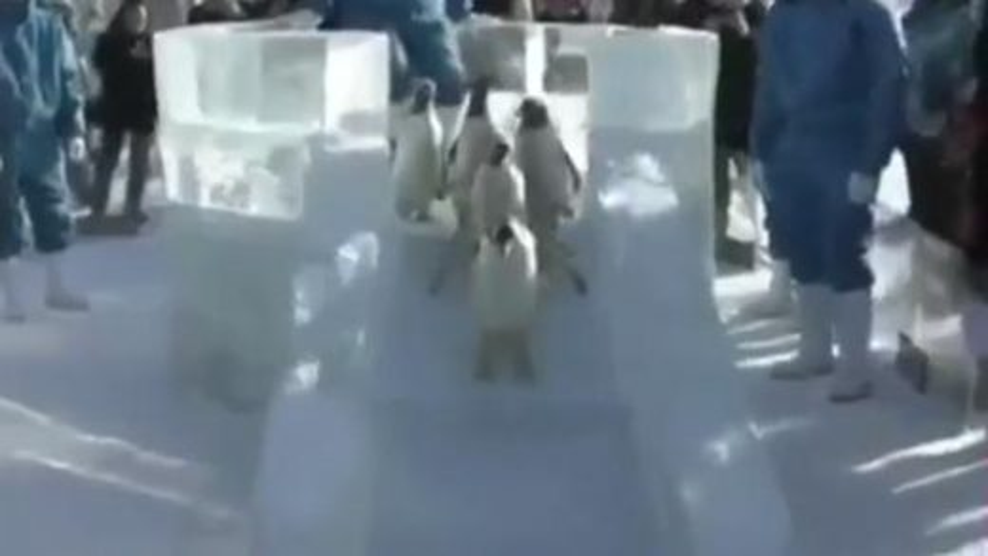 سرسره بازی پنگوئن | تگ