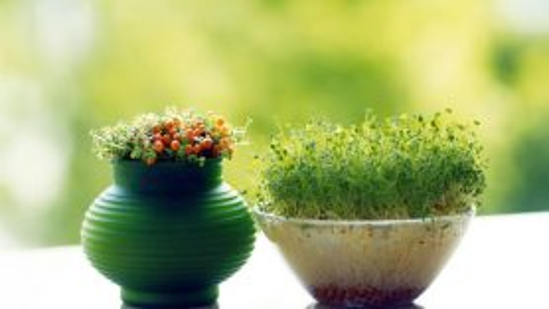فیلم آموزش سبز کردن عدس برای سفره هفت سین