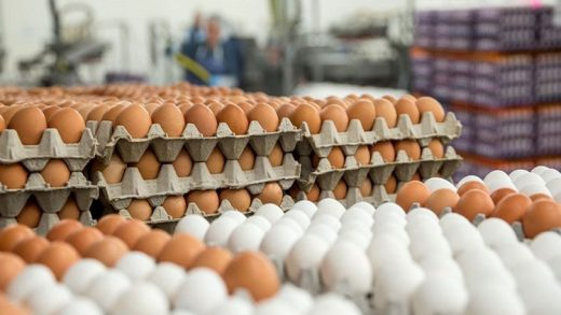تخم-مرغ | تگ