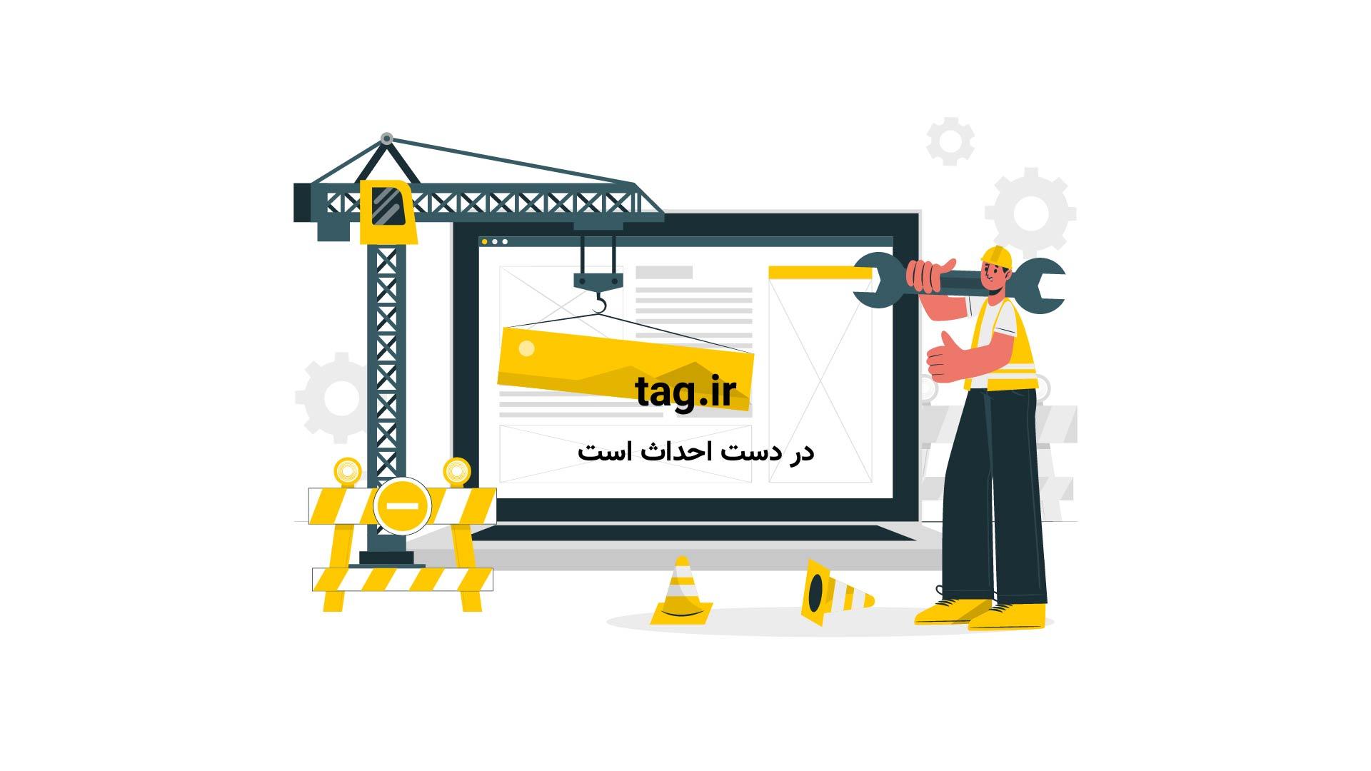 خرس قطبی ماده در جستجوی غذا برای تغذیه تولهاش | فیلم