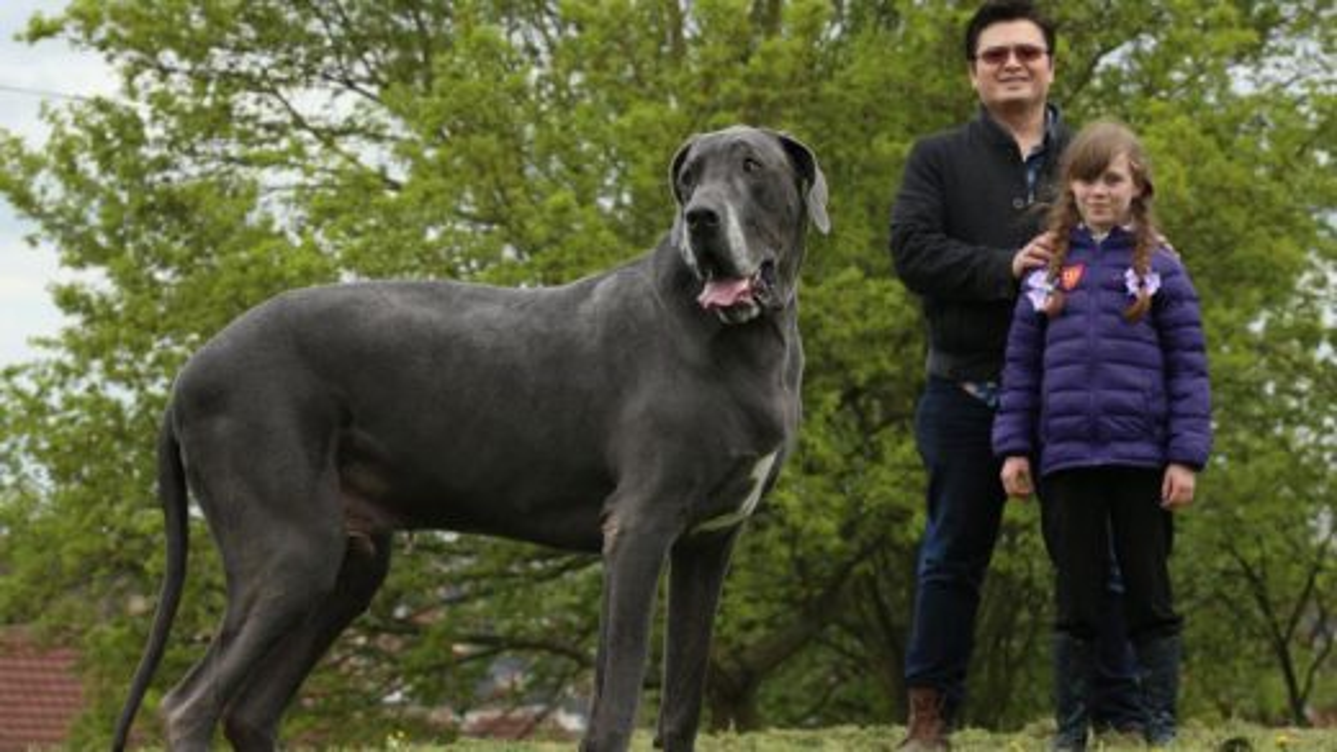 نژادهای مختلف سگ | تگ