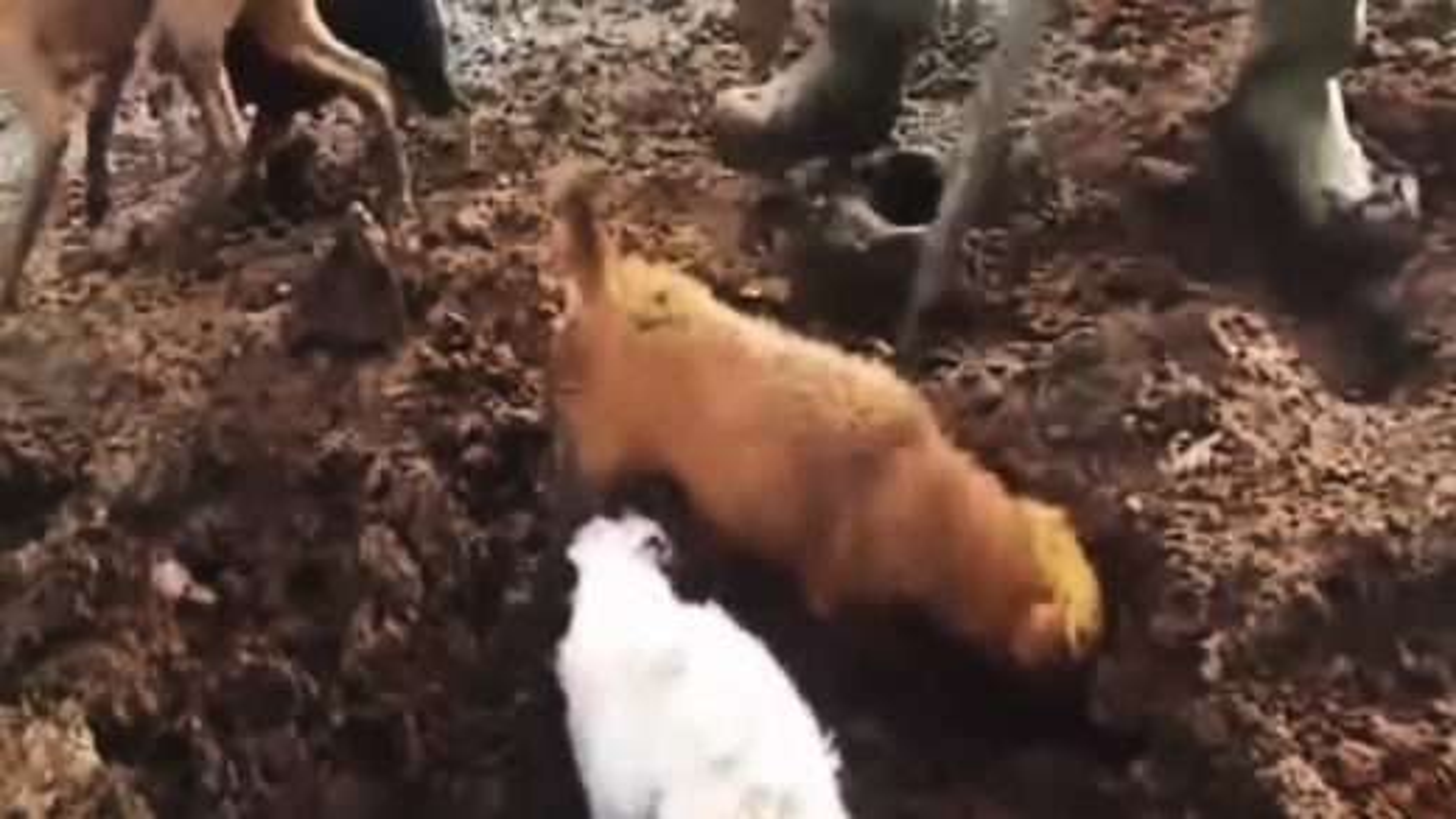 سگ شکاری | فیلم